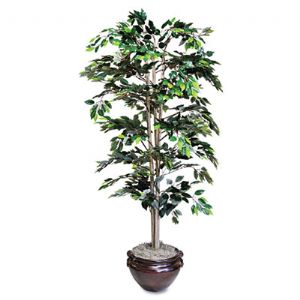 PLANT,FICUS TREE, 6FT